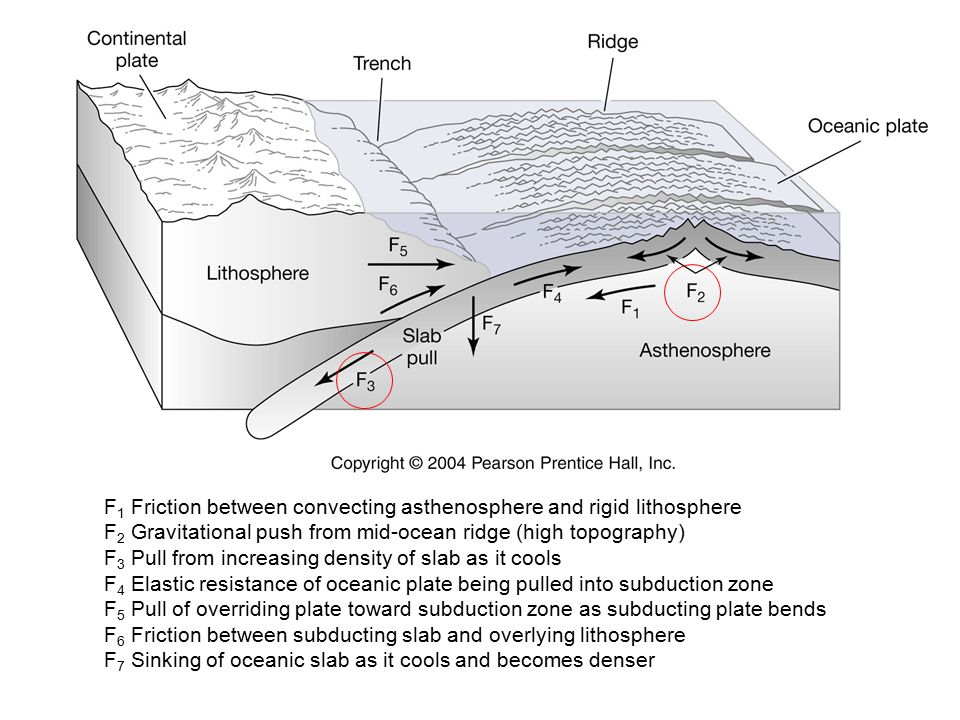 F 1 Friction between convecting asthenosphere and rigid lithosphere F 2 Gravitational push from mid-ocean ridge (high topography) F 3 Pull from increasing density of slab as it cools F 4 Elastic resistance of oceanic plate being pulled into subduction zone F 5 Pull of overriding plate toward subduction zone as subducting plate bends F 6 Friction between subducting slab and overlying lithosphere F 7 Sinking of oceanic slab as it cools and becomes denser