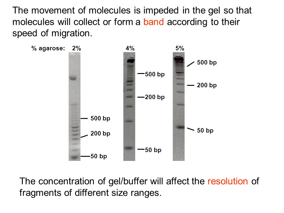 The movement of molecules is impeded in the gel so that molecules will collect or form a band according to their speed of migration.