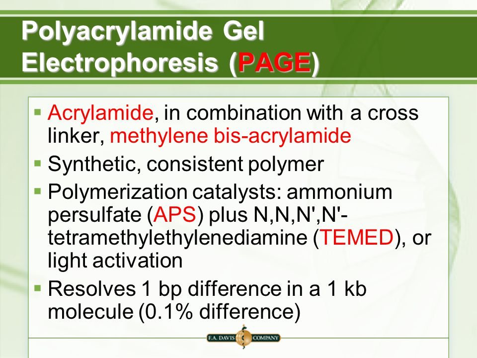 Polyacrylamide Gel Electrophoresis (PAGE)  Acrylamide, in combination with a cross linker, methylene bis-acrylamide  Synthetic, consistent polymer  Polymerization catalysts: ammonium persulfate (APS) plus N,N,N ,N - tetramethylethylenediamine (TEMED), or light activation  Resolves 1 bp difference in a 1 kb molecule (0.1% difference)