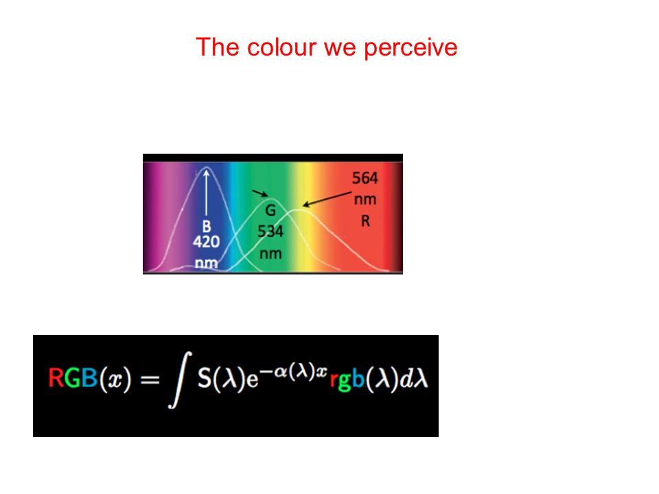 The colour we perceive