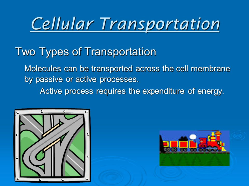 Cellular Transportation Two Types of Transportation Molecules can be transported across the cell membrane by passive or active processes.
