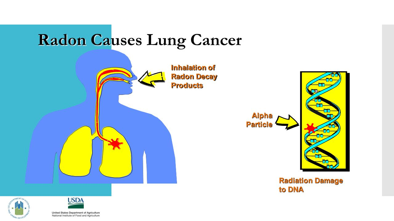 Inhalation of Radon Decay Products AlphaParticle Radiation Damage to DNA Radon Causes Lung Cancer