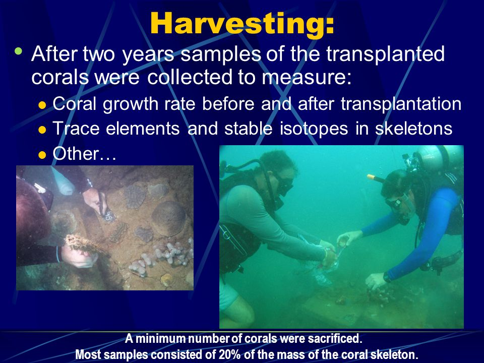 Harvesting: After two years samples of the transplanted corals were collected to measure: Coral growth rate before and after transplantation Trace elements and stable isotopes in skeletons Other… A minimum number of corals were sacrificed.