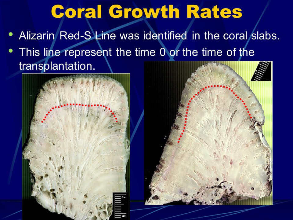 Coral Growth Rates Alizarin Red-S Line was identified in the coral slabs.