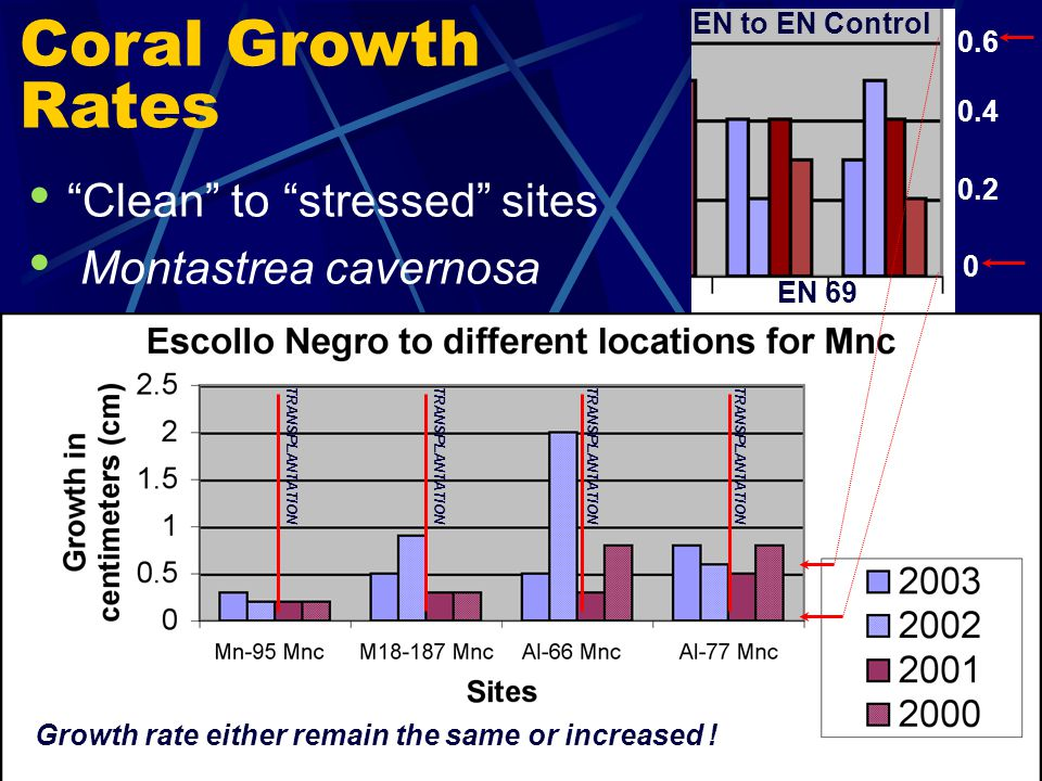 Coral Growth Rates Clean to stressed sites Montastrea cavernosa TRANSPLANTATION EN 69 0 0.4 0.2 0.6 EN to EN Control Growth rate either remain the same or increased !