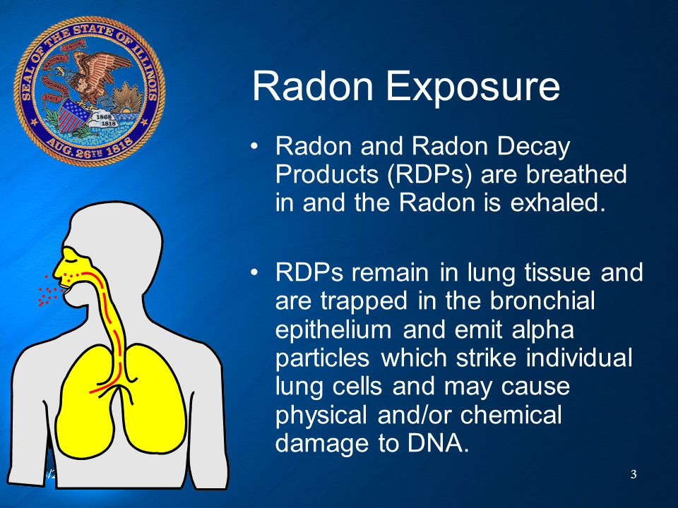4/23/20153 Radon Exposure Radon and Radon Decay Products (RDPs) are breathed in and the Radon is exhaled. RDPs remain in lung tissue and are trapped i