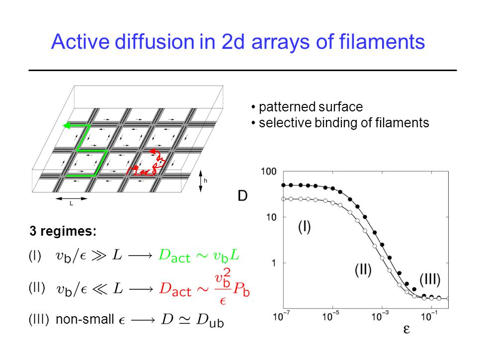 Active diffusion in 2d arrays of filaments patterned surface selective binding of filaments (I) (II) (III) non-small 3 regimes: