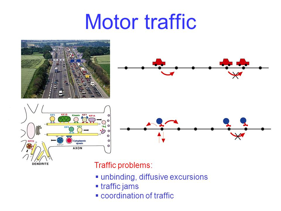 Motor traffic Traffic problems:  unbinding, diffusive excursions  traffic jams  coordination of traffic