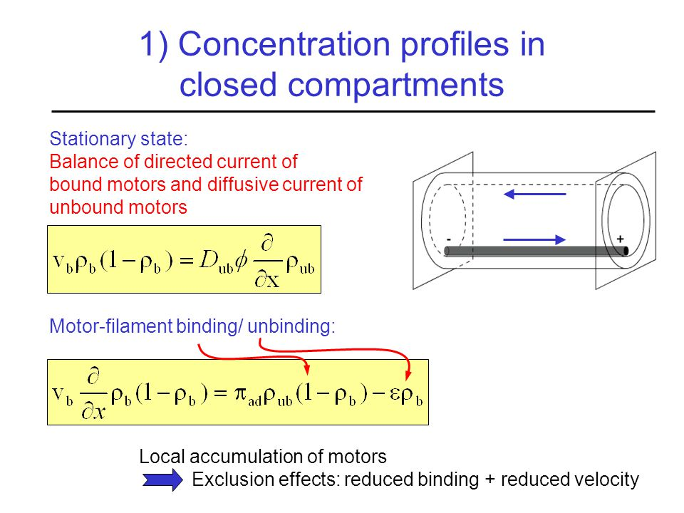 1) Concentration profiles in closed compartments Stationary state: Balance of directed current of bound motors and diffusive current of unbound motors Motor-filament binding/ unbinding: Local accumulation of motors Exclusion effects: reduced binding + reduced velocity