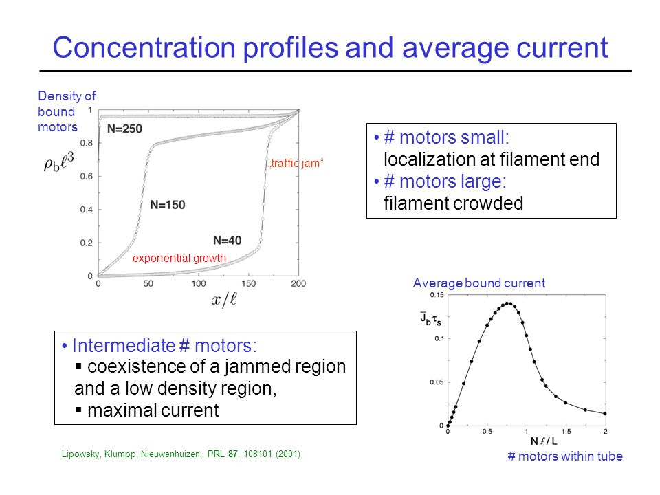 """Concentration profiles and average current """"traffic jam # motors within tube Average bound current # motors small: localization at filament end # motors large: filament crowded Density of bound motors Lipowsky, Klumpp, Nieuwenhuizen, PRL 87, 108101 (2001) Intermediate # motors:  coexistence of a jammed region and a low density region,  maximal current exponential growth"""