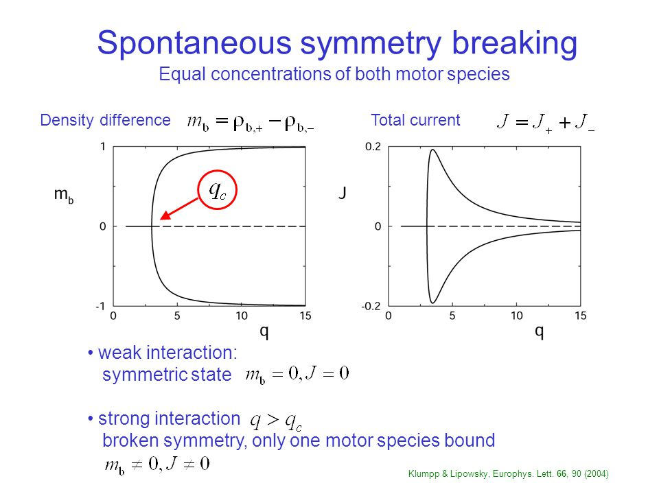 Spontaneous symmetry breaking weak interaction: symmetric state strong interaction broken symmetry, only one motor species bound Equal concentrations of both motor species Total currentDensity difference Klumpp & Lipowsky, Europhys.