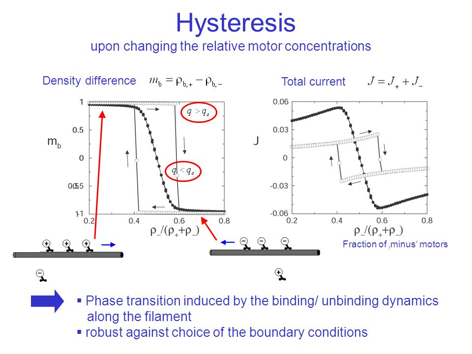 Hysteresis upon changing the relative motor concentrations Total current Density difference Fraction of 'minus' motors  Phase transition induced by the binding/ unbinding dynamics along the filament  robust against choice of the boundary conditions