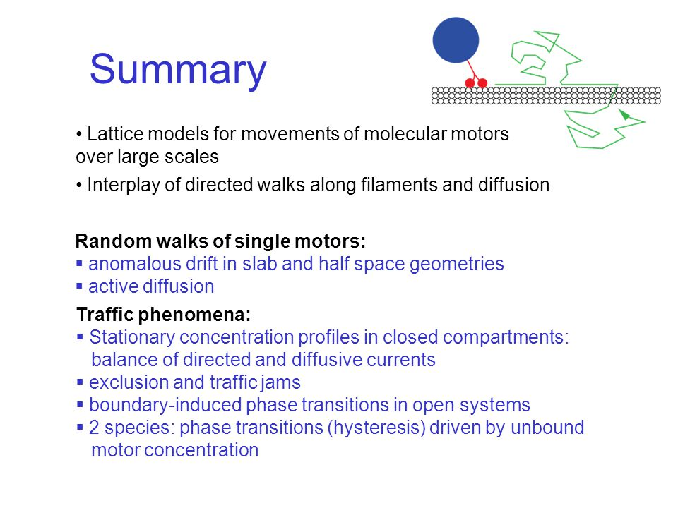 Summary Lattice models for movements of molecular motors over large scales Interplay of directed walks along filaments and diffusion Random walks of single motors:  anomalous drift in slab and half space geometries  active diffusion Traffic phenomena:  Stationary concentration profiles in closed compartments: balance of directed and diffusive currents  exclusion and traffic jams  boundary-induced phase transitions in open systems  2 species: phase transitions (hysteresis) driven by unbound motor concentration