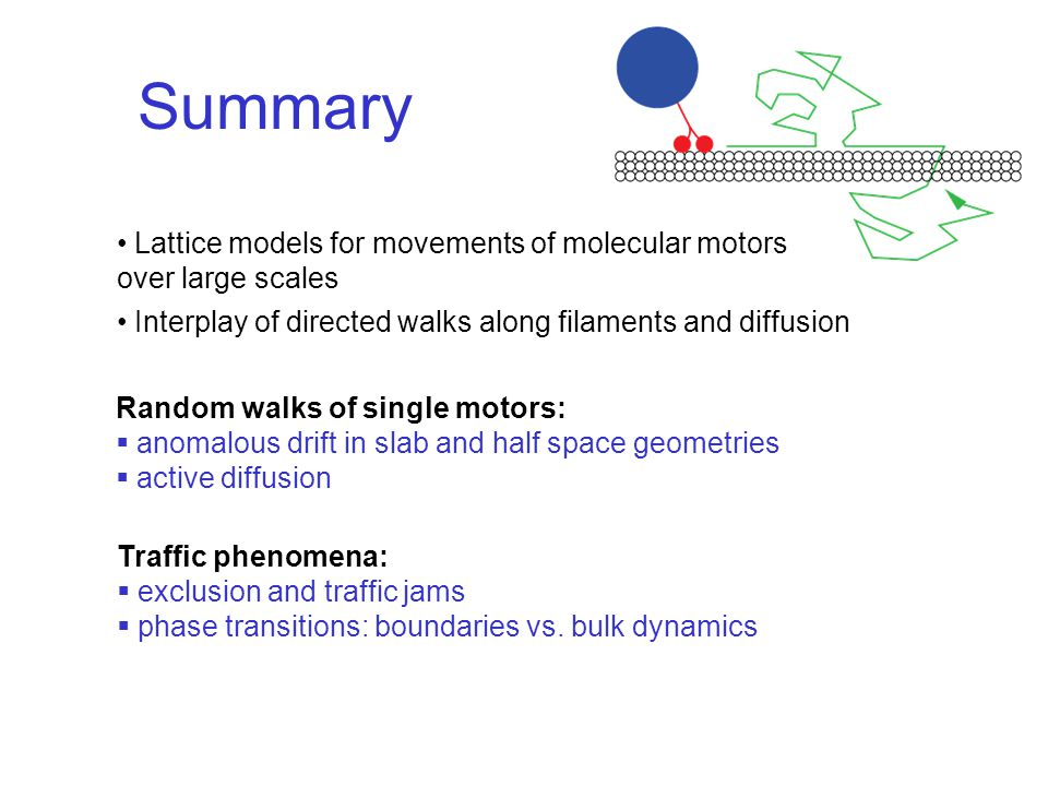 Summary Lattice models for movements of molecular motors over large scales Interplay of directed walks along filaments and diffusion Random walks of single motors:  anomalous drift in slab and half space geometries  active diffusion Traffic phenomena:  exclusion and traffic jams  phase transitions: boundaries vs.