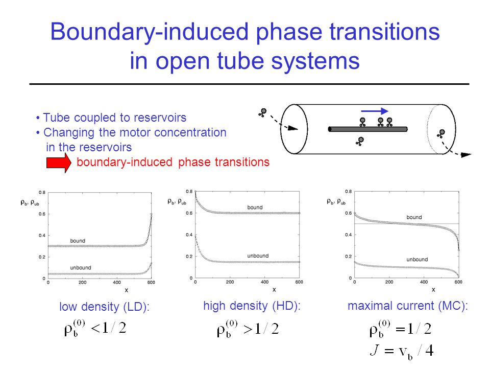 far from the boundaries: plateau with radial equilibrium low density (LD): high density (HD):maximal current (MC): Boundary-induced phase transitions in open tube systems Tube coupled to reservoirs Changing the motor concentration in the reservoirs boundary-induced phase transitions