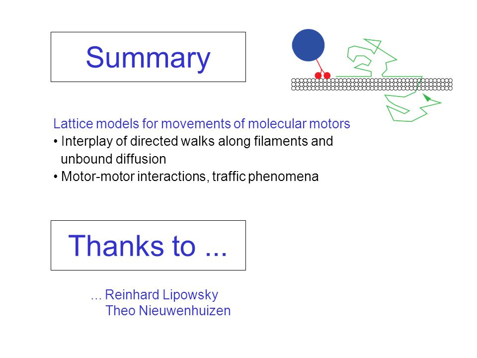 Summary Lattice models for movements of molecular motors Interplay of directed walks along filaments and unbound diffusion Motor-motor interactions, traffic phenomena...