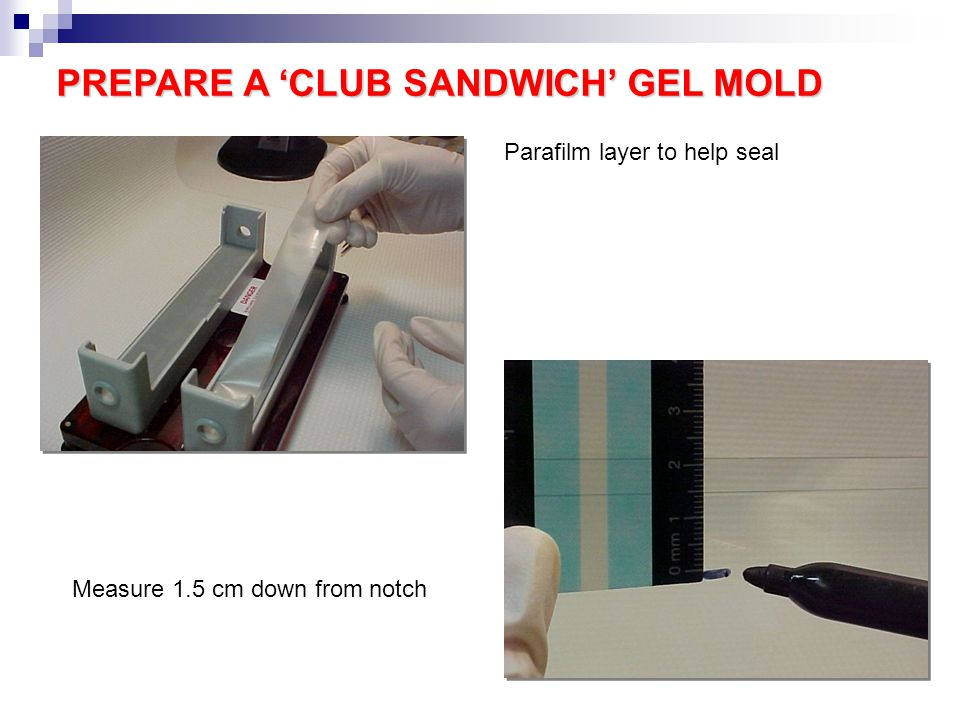 PREPARE A 'CLUB SANDWICH' GEL MOLD Parafilm layer to help seal Measure 1.5 cm down from notch