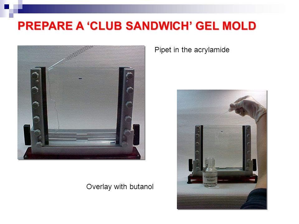PREPARE A 'CLUB SANDWICH' GEL MOLD Pipet in the acrylamide Overlay with butanol