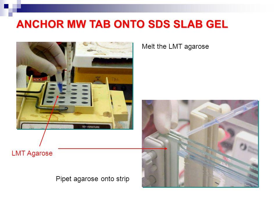 ANCHOR MW TAB ONTO SDS SLAB GEL LMT Agarose Melt the LMT agarose Pipet agarose onto strip
