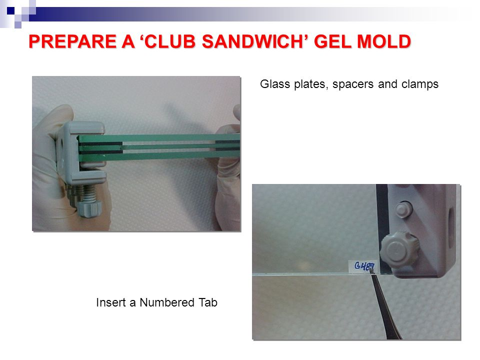 PREPARE A 'CLUB SANDWICH' GEL MOLD Glass plates, spacers and clamps Insert a Numbered Tab