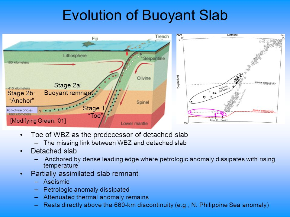 Evolution of Buoyant Slab Toe of WBZ as the predecessor of detached slab –The missing link between WBZ and detached slab Detached slab – Anchored by dense leading edge where petrologic anomaly dissipates with rising temperature Partially assimilated slab remnant –Aseismic –Petrologic anomaly dissipated –Attenuated thermal anomaly remains –Rests directly above the 660-km discontinuity (e.g., N.