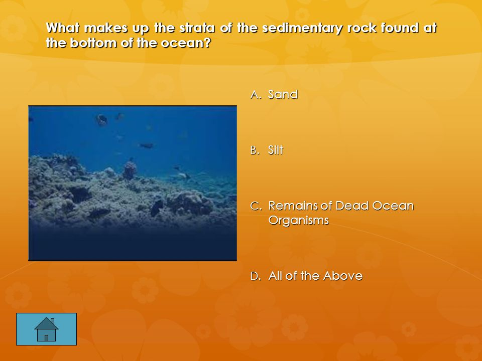 What makes up the strata of the sedimentary rock found at the bottom of the ocean.