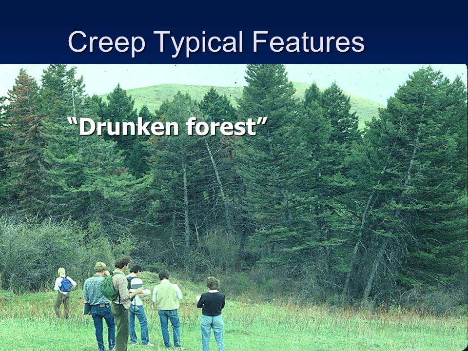 """Creep Typical Features """"Drunken forest"""""""