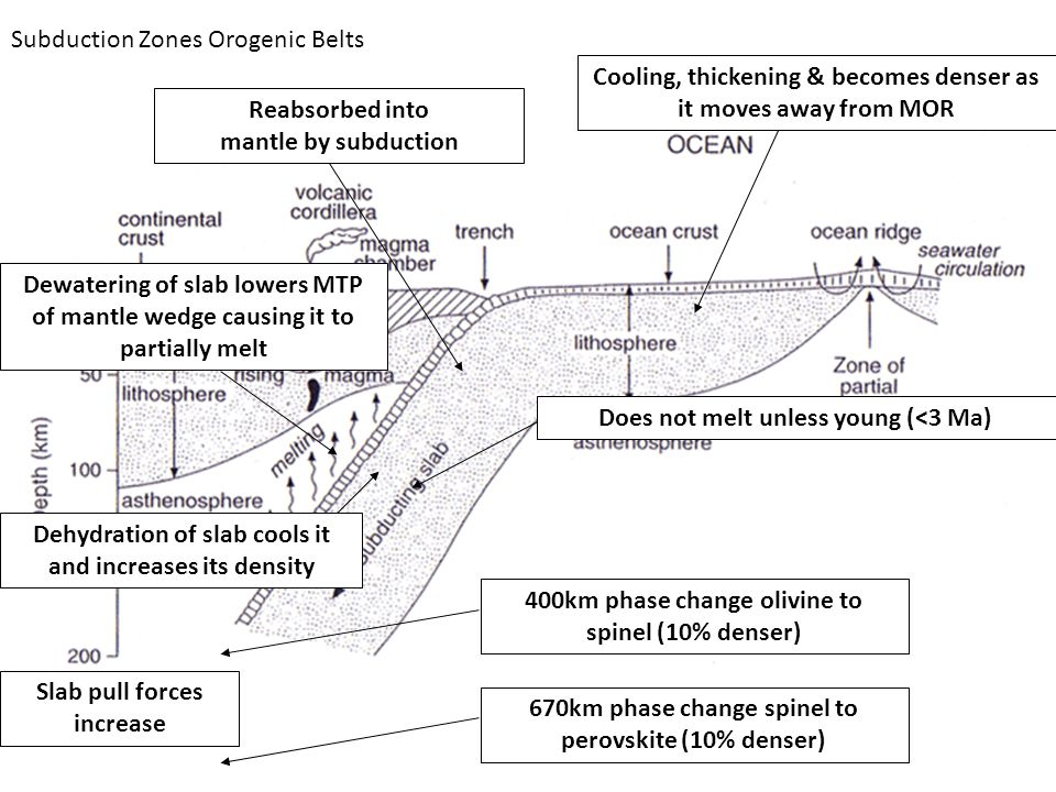 Subduction Zones Orogenic Belts Cooling, thickening & becomes denser as it moves away from MOR Reabsorbed into mantle by subduction Does not melt unless young (<3 Ma) Dewatering of slab lowers MTP of mantle wedge causing it to partially melt Dehydration of slab cools it and increases its density 400km phase change olivine to spinel (10% denser) 670km phase change spinel to perovskite (10% denser) Slab pull forces increase