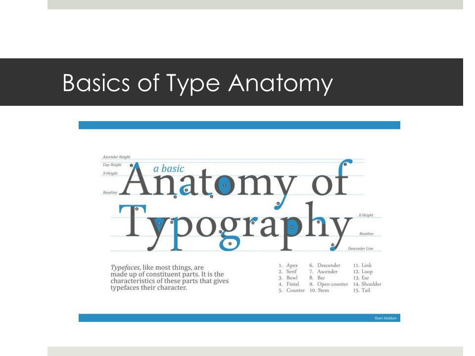 Basics of Type Anatomy