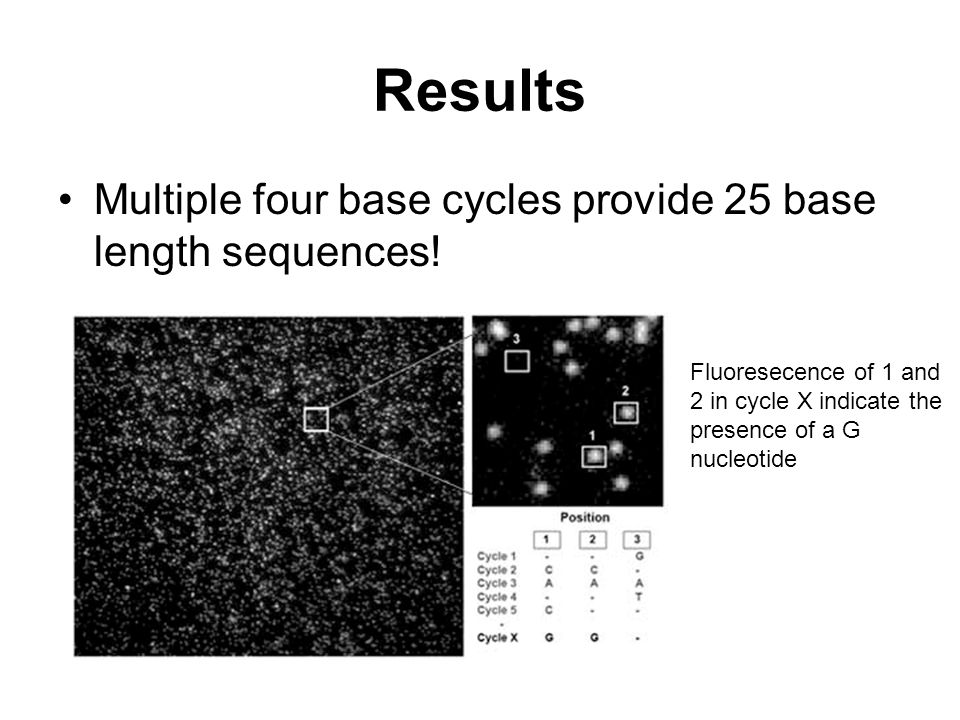 Results Multiple four base cycles provide 25 base length sequences! Fluoresecence of 1 and 2 in cycle X indicate the presence of a G nucleotide