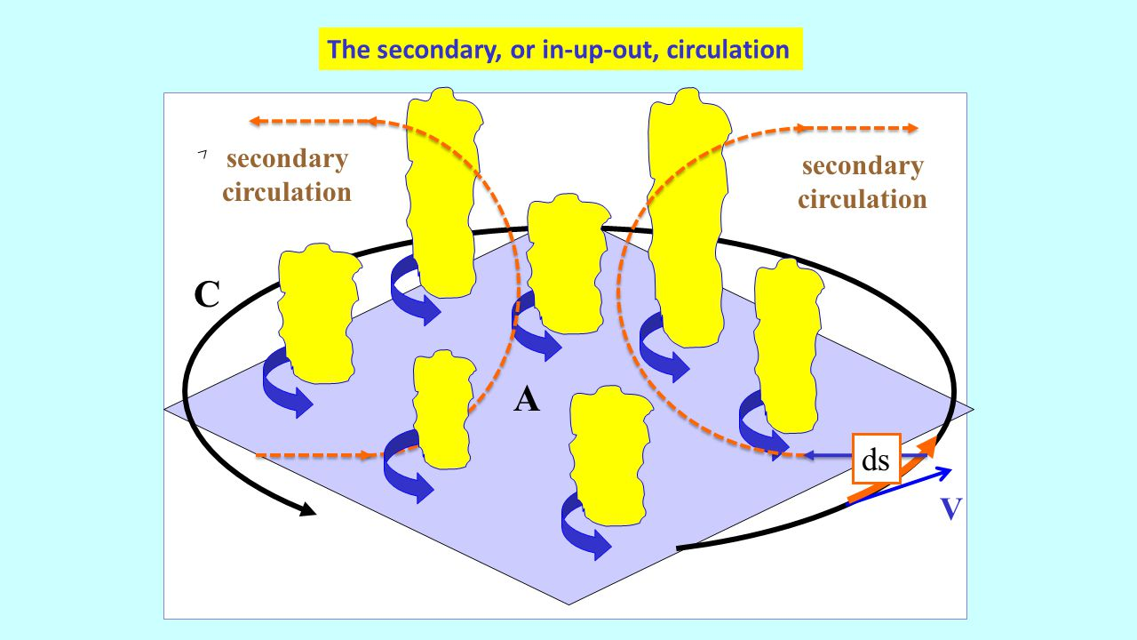 V C A The secondary, or in-up-out, circulation ds secondary circulation secondary circulation