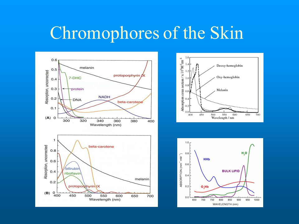 Chromophores of the Skin