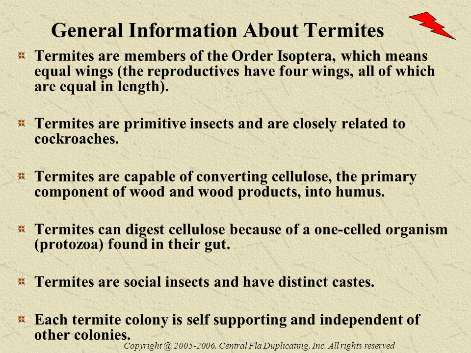General Information About Termites Termites are members of the Order Isoptera, which means equal wings (the reproductives have four wings, all of which are equal in length).