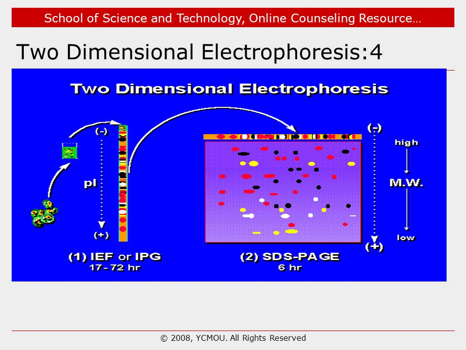 School of Science and Technology, Online Counseling Resource… Two Dimensional Electrophoresis:4 © 2008, YCMOU. All Rights Reserved