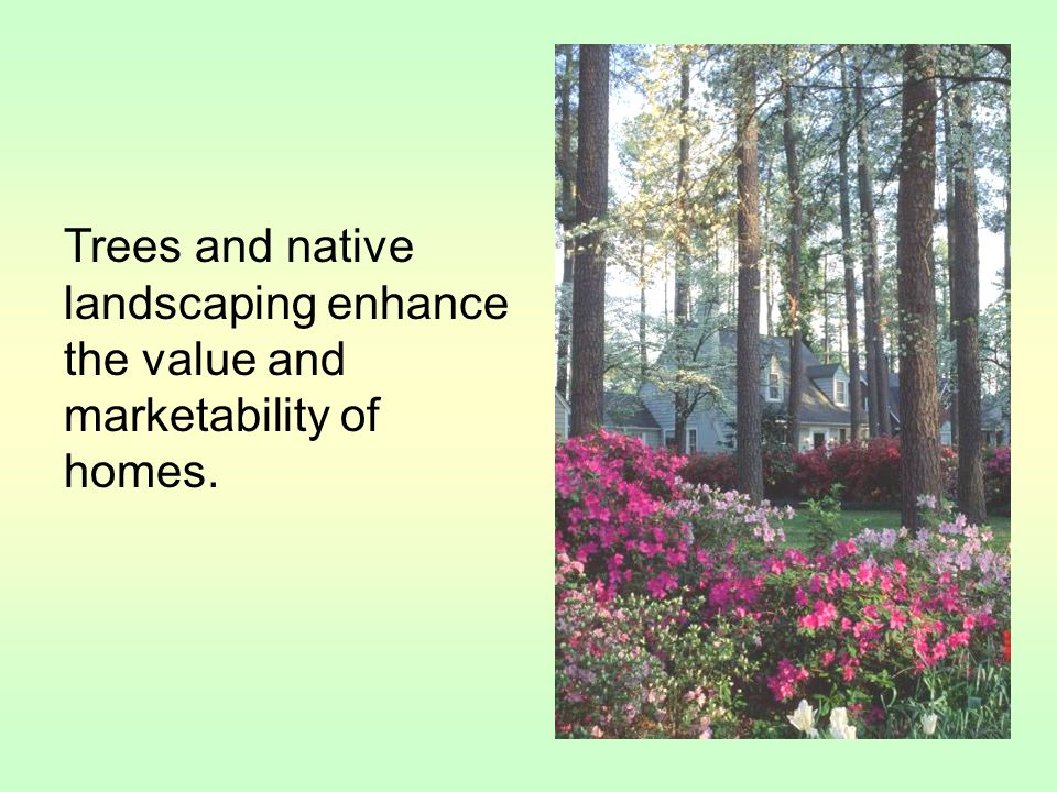 Trees and native landscaping enhance the value and marketability of homes.