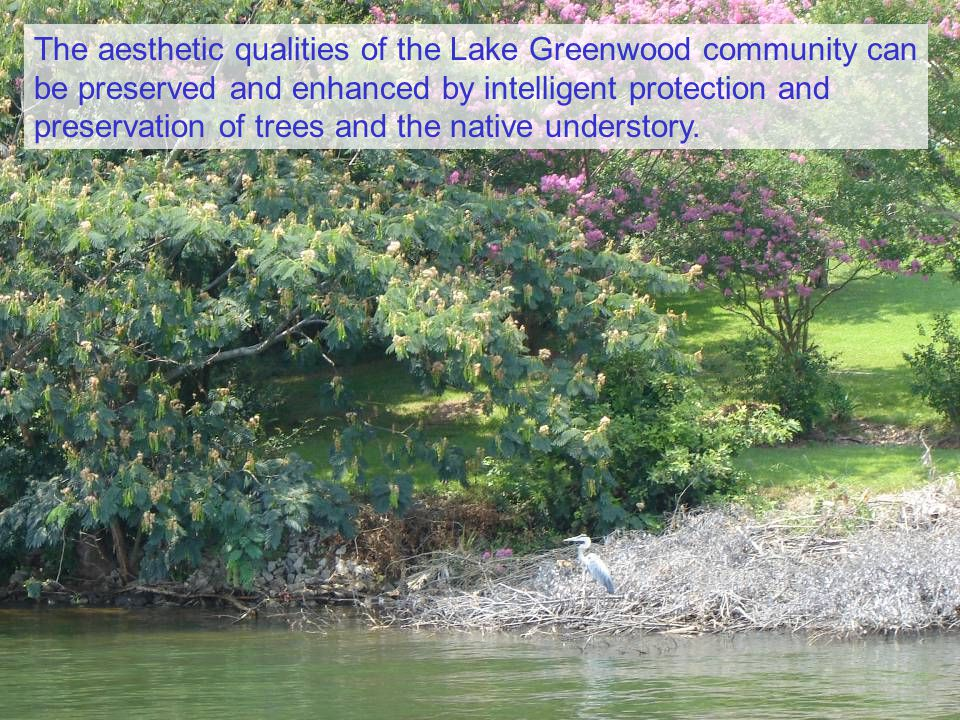The aesthetic qualities of the Lake Greenwood community can be preserved and enhanced by intelligent protection and preservation of trees and the native understory.