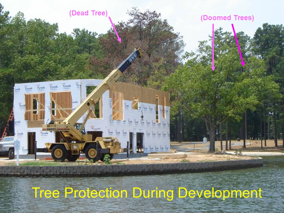Tree Protection During Development (Dead Tree) (Doomed Trees)