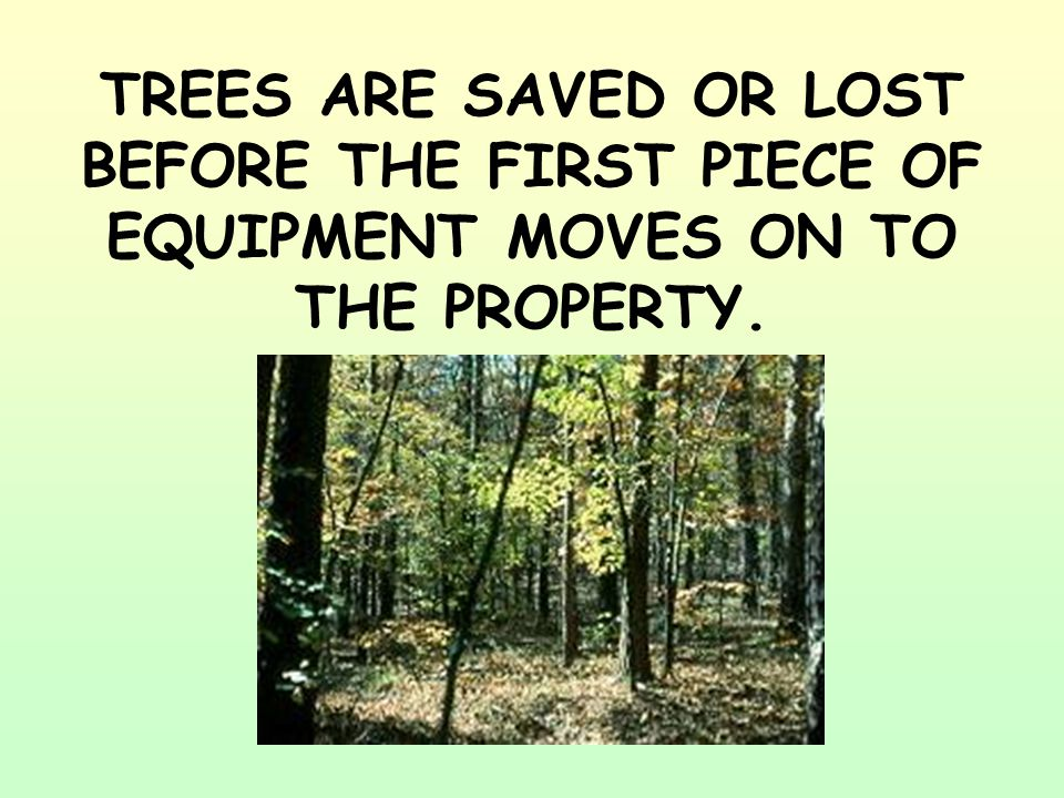 TREES ARE SAVED OR LOST BEFORE THE FIRST PIECE OF EQUIPMENT MOVES ON TO THE PROPERTY.