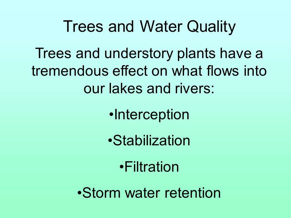 Trees and Water Quality Trees and understory plants have a tremendous effect on what flows into our lakes and rivers: Interception Stabilization Filtration Storm water retention
