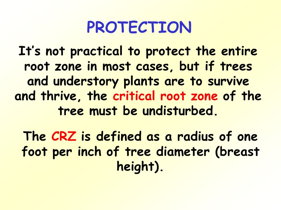 It's not practical to protect the entire root zone in most cases, but if trees and understory plants are to survive and thrive, the critical root zone of the tree must be undisturbed.