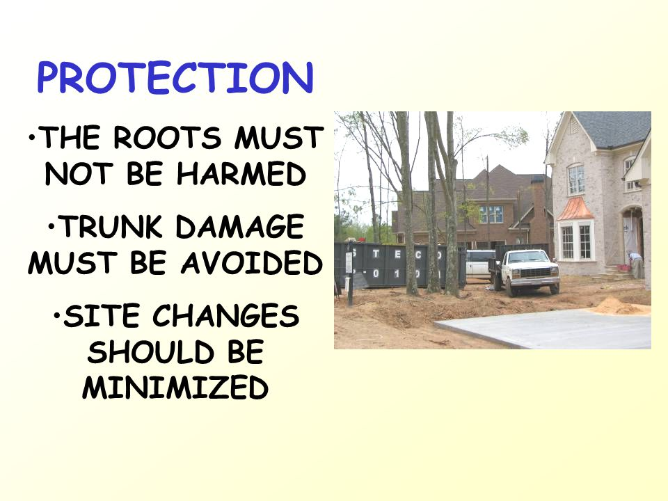 THE ROOTS MUST NOT BE HARMED TRUNK DAMAGE MUST BE AVOIDED SITE CHANGES SHOULD BE MINIMIZED
