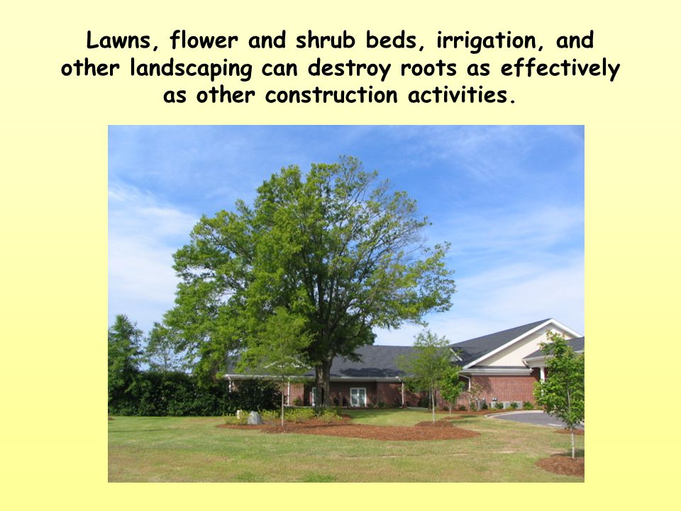 Lawns, flower and shrub beds, irrigation, and other landscaping can destroy roots as effectively as other construction activities.