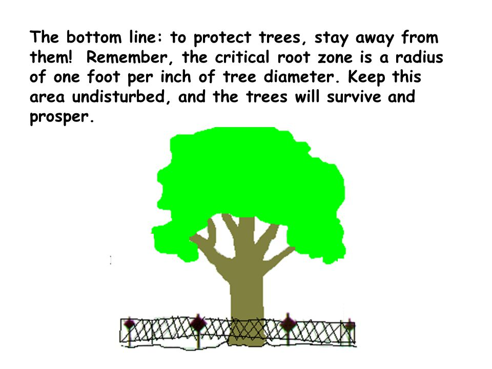The bottom line: to protect trees, stay away from them.