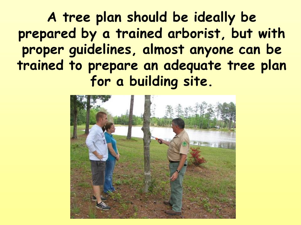 A tree plan should be ideally be prepared by a trained arborist, but with proper guidelines, almost anyone can be trained to prepare an adequate tree plan for a building site.