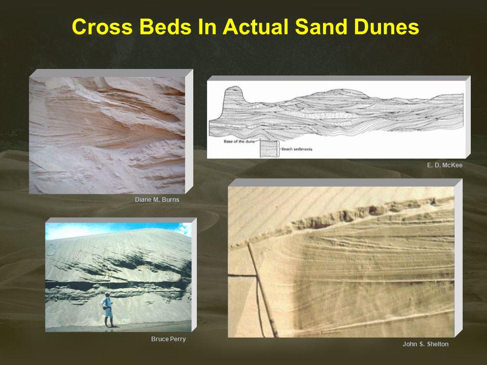 Cross Beds In Actual Sand Dunes John S. Shelton E. D. McKee Bruce Perry Diane M. Burns