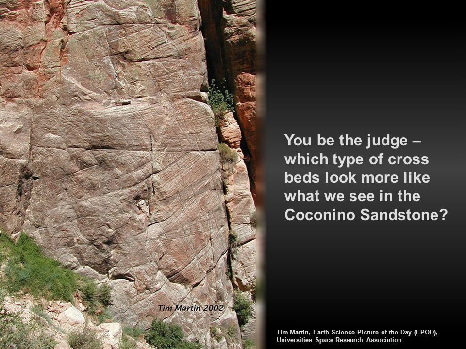 You be the judge – which type of cross beds look more like what we see in the Coconino Sandstone? Tim Martin, Earth Science Picture of the Day (EPOD),