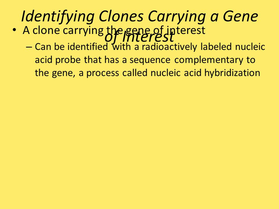 Identifying Clones Carrying a Gene of Interest A clone carrying the gene of interest – Can be identified with a radioactively labeled nucleic acid pro