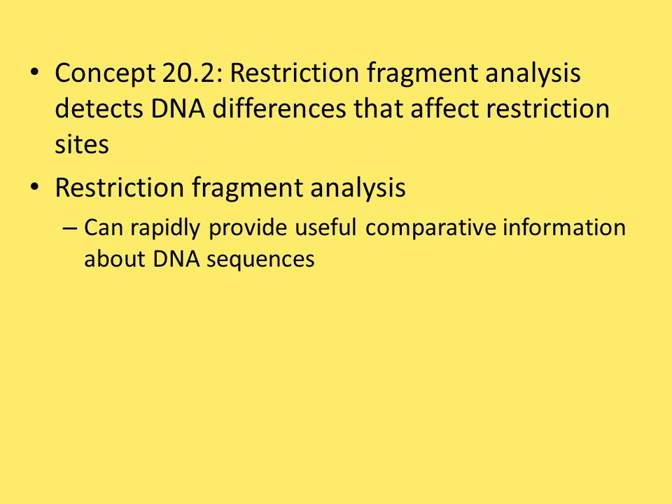 Concept 20.2: Restriction fragment analysis detects DNA differences that affect restriction sites Restriction fragment analysis – Can rapidly provide