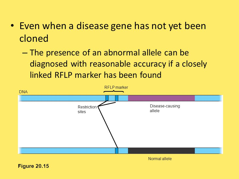 Even when a disease gene has not yet been cloned – The presence of an abnormal allele can be diagnosed with reasonable accuracy if a closely linked RF