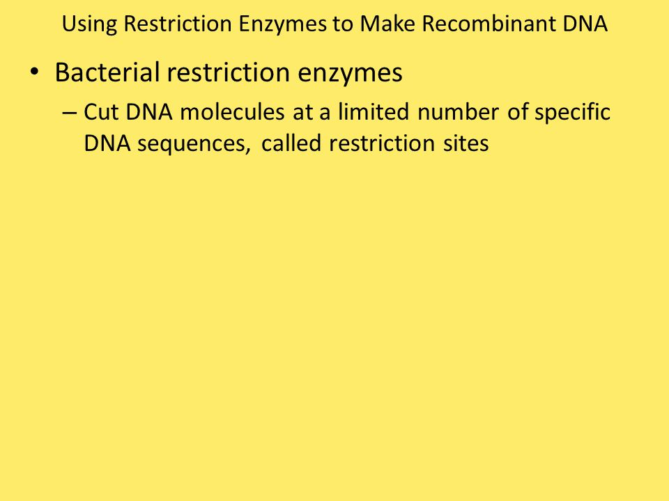 Using Restriction Enzymes to Make Recombinant DNA Bacterial restriction enzymes – Cut DNA molecules at a limited number of specific DNA sequences, cal